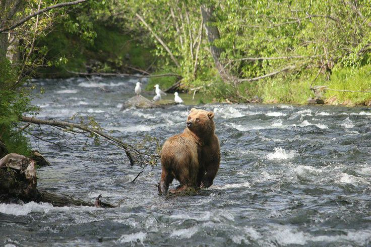 Fishing on the russian river alaska next to this wild for Russian river fishing