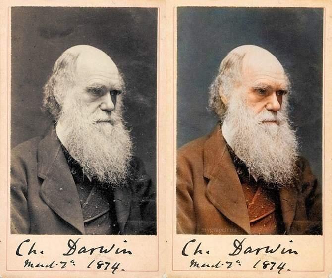 Darwin: History Photo, Historical Photo, Black And White, Famous Photo, Charles Darwin, Color Photo, Black White, Old Photo, Vintage Photo