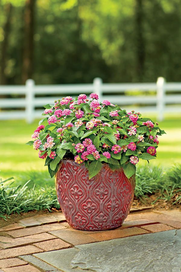 388 Best Container Gardens Images On Pinterest | Hydrangeas, Potted Plants  And Gardens