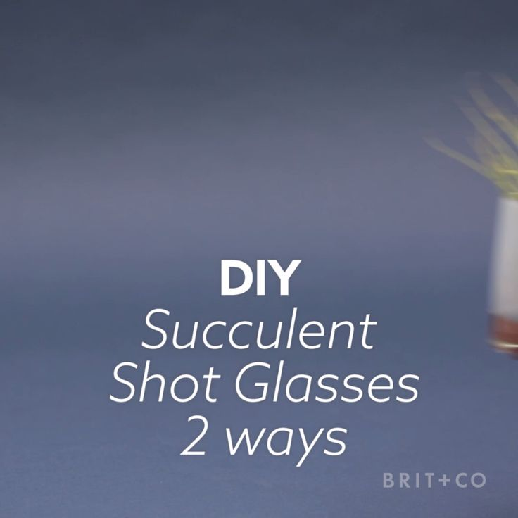 Watch this DIY video tutorial to learn how to make a variety of succulent pots out of shot glasses.