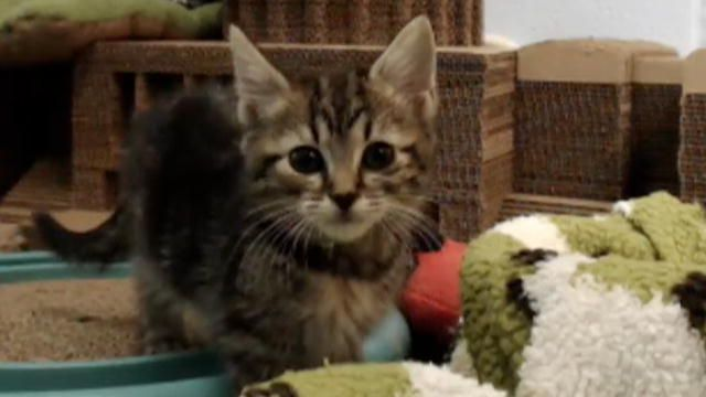 We can't all watch the kitten cam 24/7 (...or can we?), so we pulled some cute moments from the last month. Enjoy!
