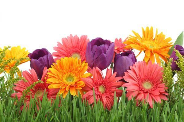 Цветы : 2056