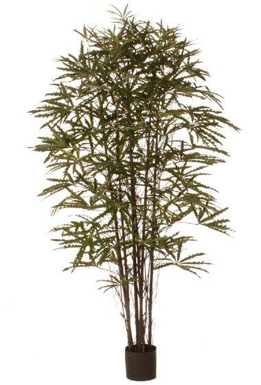 https://www.onlinekunstplanten.nl/kunstboom-aralia-black-bamboe-180cm.html
