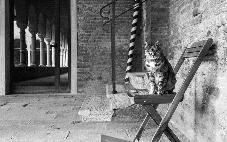 La fotografa dei gatti marianna cat photographer gatti