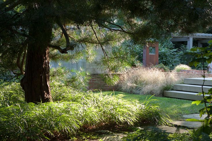 17 best ornamental grasses images on pinterest for Gunn design landscape architecture christchurch