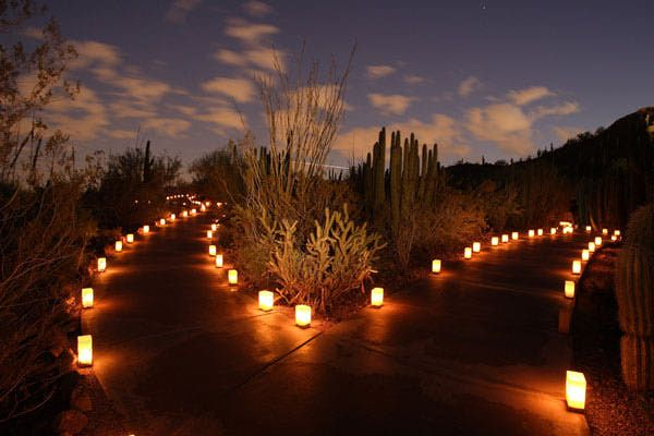 17 Best Images About Desert Botanical Garden In Phoenix On Pinterest Gardens Glass Art And