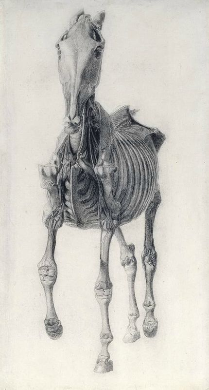 George Stubbs (1724-1806), Finished study for Anatomy of a Horse:10th Anatomical Table. © Royal Academy of Arts, London.