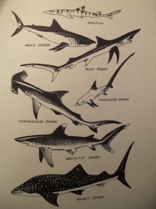 a summary of different types of sharks To wrap it up, let's look at some of the types of sharks we've been discussing   blacktip sharks are different than blacktip reef sharks (this confused me for.