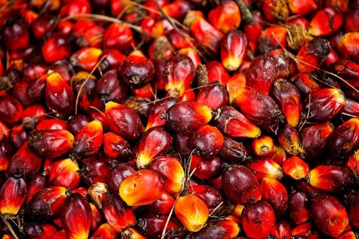 Dynamic, market-hardened, professional Bulk Oil traders/ distributors wanted, to move palm olein in bulk, ex Durban to SADC markets.High earnings.Traceability in Palm Olein bulk trading sectors essential.Send CV to dci.trade@telkomsa.net