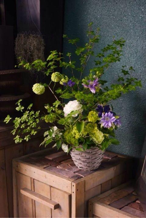 Clematis flower arrangement . green & purple