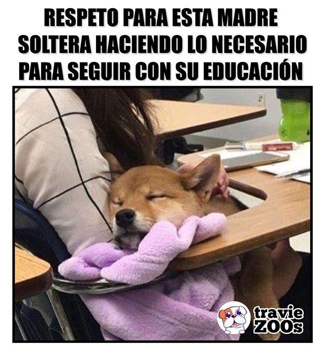 Porque Nadie Dijo Que Ser Madre Soltera Y Continuar Estudiando Fuera Facil Memes Divertidos Humor Divertido Sobre Animales Memes Perros