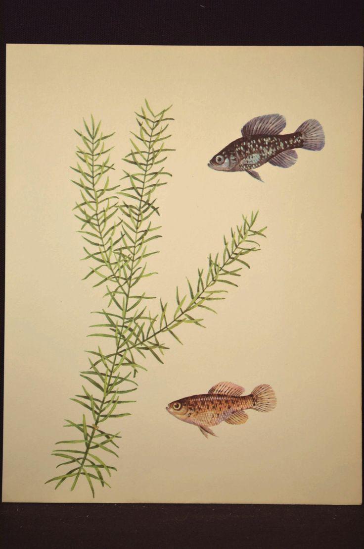 2897 best РЫБЫ images on Pinterest   Fish art, Limited edition ...