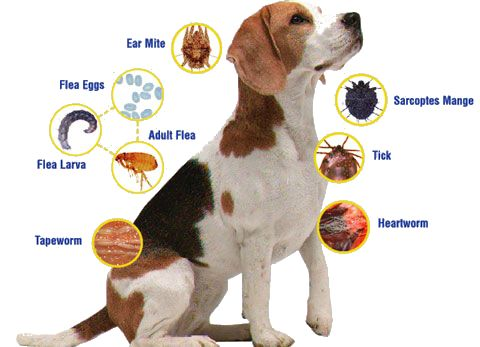 CLICK ON IMAGE TO BUY: The Only Natural Pet EasyDefense Flea & Tick Tag is a safe, chemical-free way to keep harmful pests off of your pet. Using state of the art holistic technology, the EasyDefense Flea & Tick Tag utilizes your pet's own bio-energy to c