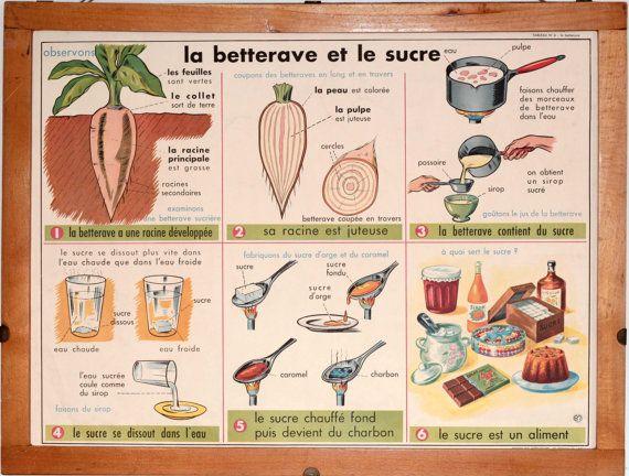 Vintage - Affiche scolaire double face d'école Française des années 1950 / 1960 La Betterave et le Sucre - La Noix