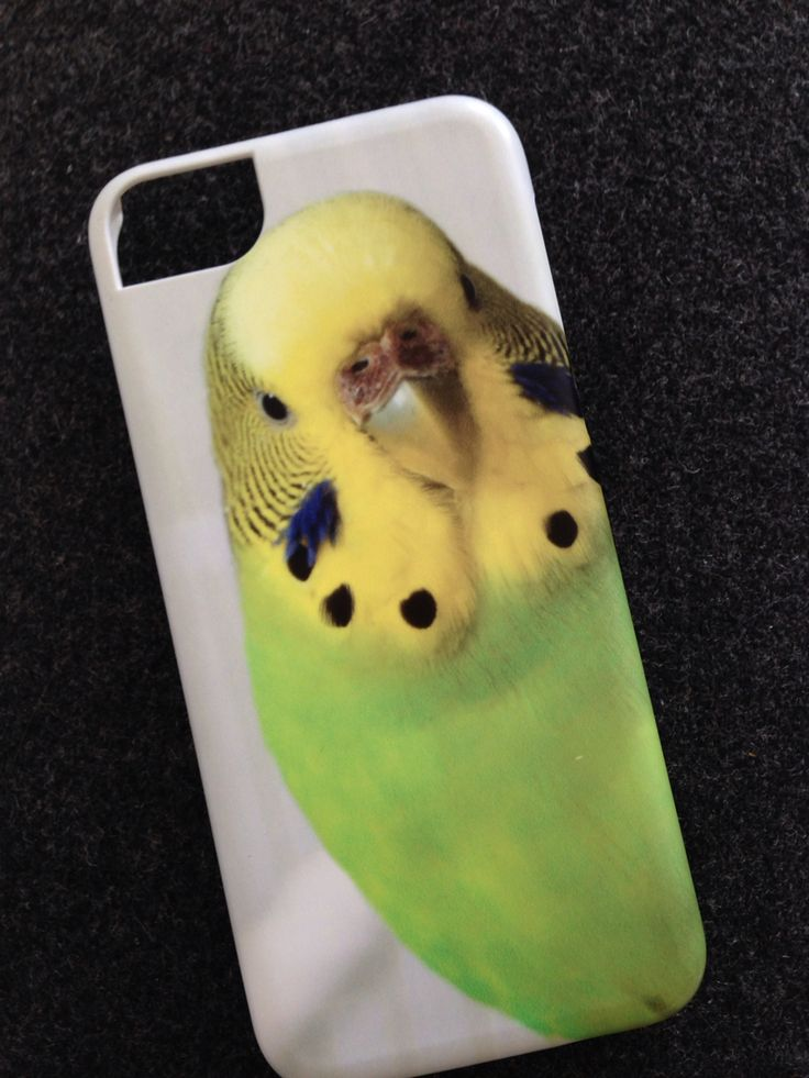Budgie iPhone case from Photobox