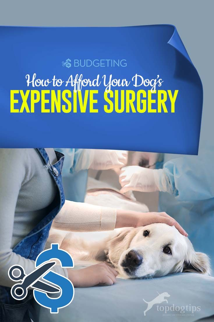 How To Afford An Expensive Pet Surgery Dog Health Care Dog Health Tips Surgery