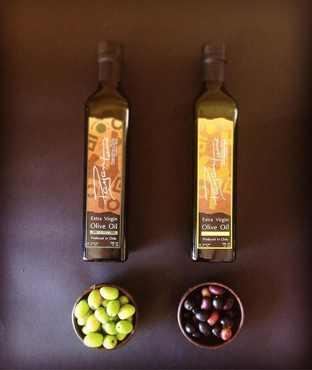 A partir de estas Olivas elaboramos Payantume Aceite de Oliva, monovarietal Sevillana( a la izquierda) y Manzanilla( a la derecha). #Olivas #evoo #oliveoil #aceitedeoliva #varietal #sevillana #manzanilla #aceitunas #huasco #huascobajo #valledelhuasco #atacama #chile #conamordechile #payantume #manoscampesinas #gourmet #instagourmet #foodie