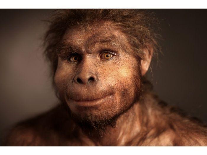 homo heidelbergensis bottom view - Google Search