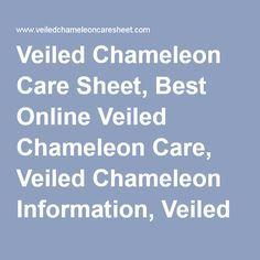 Veiled Chameleon Care Sheet, Best Online Veiled Chameleon Care, Veiled Chameleon…