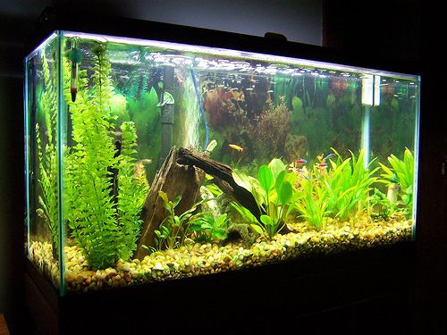 well maintained fresh water aquarium would love to try a