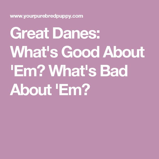 Great Danes: What's Good About 'Em? What's Bad About 'Em?