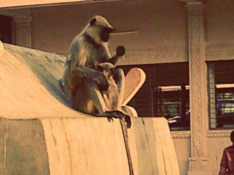 Monkey mom with his monkey baby... awww