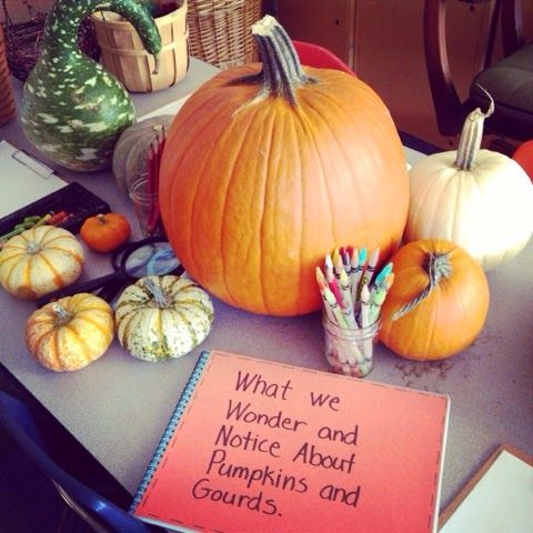Inquiring Minds: Mrs. Myers' Kindergarten: Looking Closer at Pumpkins