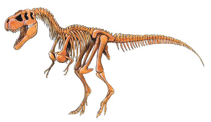 "Tyrannosaur Rex Dinosaur Anatomy - ""King of the Dinosaurs"""
