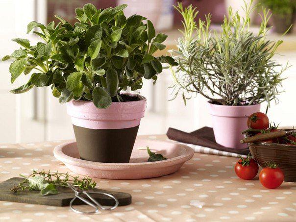 Лекарственные травы можно растить и дома