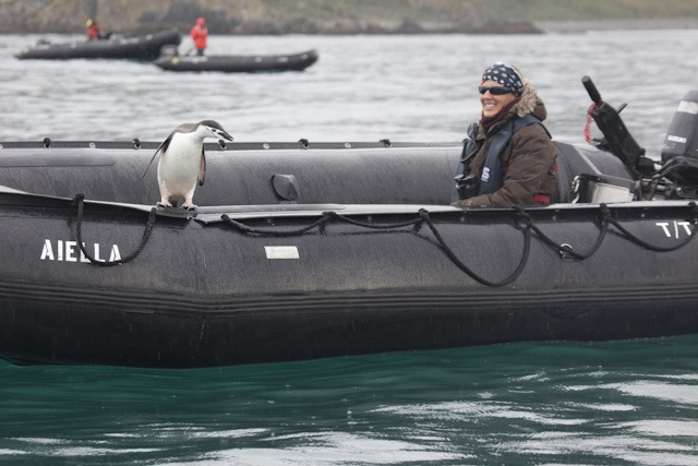 Chinstrap penguin hitches a ride! This resourceful chinstrap penguin hopped aboard one of Silver Explorer's Zodiac crafts exploring South Georgia on expedition cruise 7202. More info: http://www.silversea.com/expeditions/voyage-journals/?voyagejournal=7202=9
