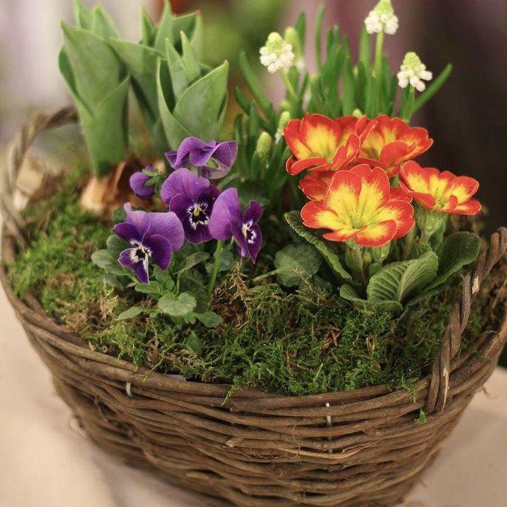 Rôzne voňavé kytičky košíky aranžmány zo živých kvietkov v Teleráne. Tento krát bola so mnou Eva Maarova Bindova z Kvetinárstva Orchidea Bratislava. Evka ďakujem  #kvetysilvia #kvetinarstvo #kvety #svadba #love #instagood #cute #follow #photooftheday #beautiful #tagsforlikes #happy #like4like #nature #style #nofilter #pretty #flowers #design #awesome #wedding #home #handmade #flower #summer #bride #weddingday #floral #naturelovers #picoftheday