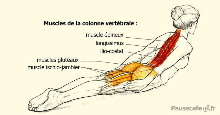 Exercice de musculation du dos