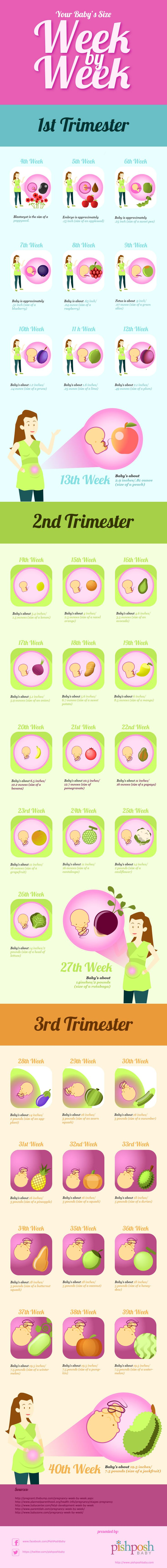 Baby's Size Week by Week infographic