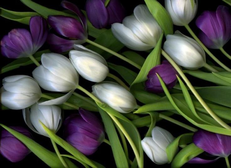 """Διεθνή Βραβεία Φωτογραφίας 2012: Tulip Medley"""" , 1ο βραβείο στην κατηγορία Φύση-λουλούδια, από τον Christian Slanec"""