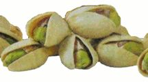 Health benefits of Pistachios    Pistachios are delicious tree nuts recognized for their wholesome nutrition principles. Together with walnuts, almonds, and cashew, they form important source of protein, fats and minerals to otherwise dry and arid regions of Central, West and South Asian regions.    Pistachios are rich source of energy; 100 g of nuts contain 557 calories. In addition, they are rich in mono-unsaturated fatty acids like oleic acid and an excellent source of antioxidants.