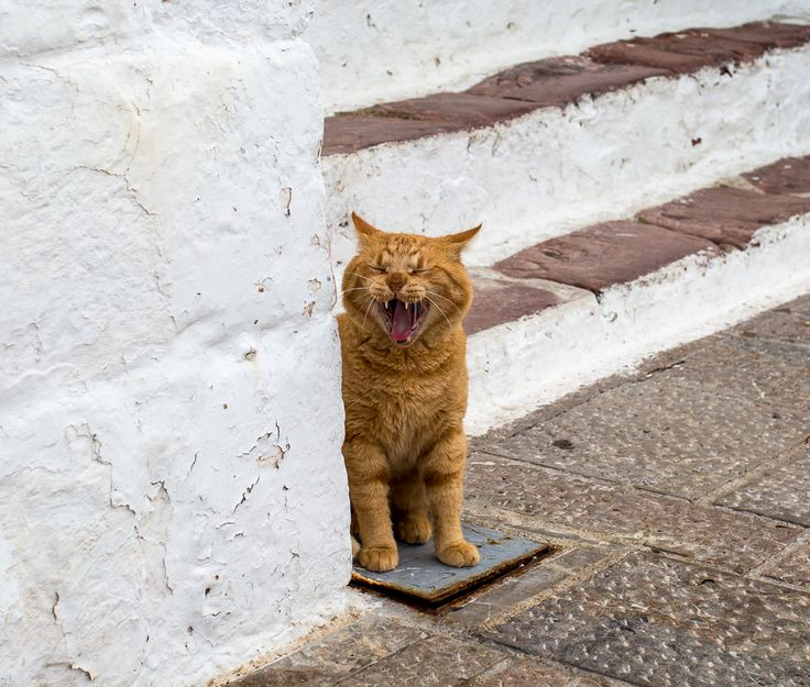 Greek cats are the country's mascots. Meet this fella captured by #travelblogger Alisa R Kennedy, read her story here: http://www.passionforgreece.com/index.php?option=com_content&view=article&id=131&lang=en#experience #greekcats #passionforgreece #hydra
