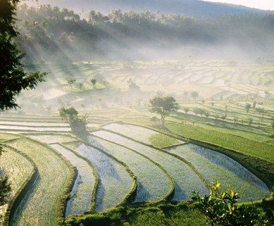 The Balinese rice terraces go back over 2,000 years when hard-working farmers with primitive hand tools began carving the stepped terraces out of steep hill sides.