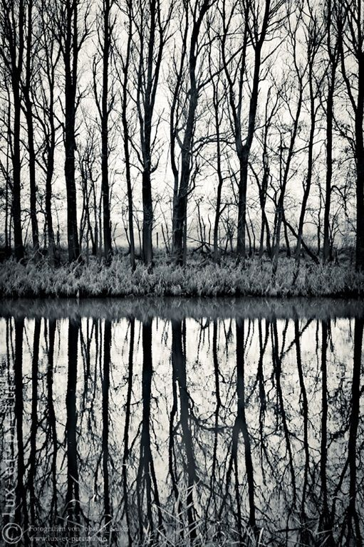 This image is perfectly symmetrical, which makes it balanced, dark, and dreamy.