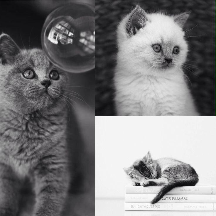 Speciaal voor jou Daantje mijn lieve Trouwe kleiner lieve schat van een Kat*