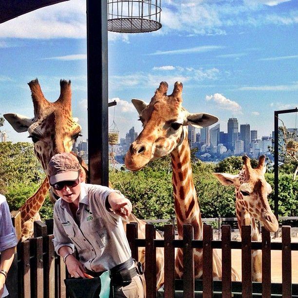 Sydney Toronga zoo