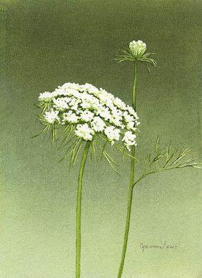 Christine Reichow    WATERCOLOR