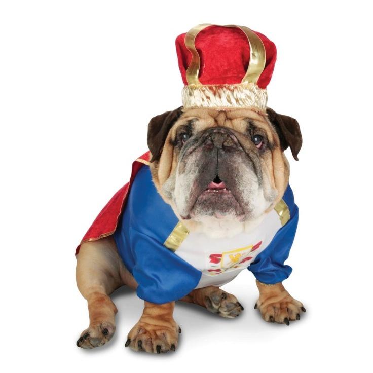 Zelda Canine King Pet Costume from BuyCostumes.com #Zelda #PetCostume#DogCostume