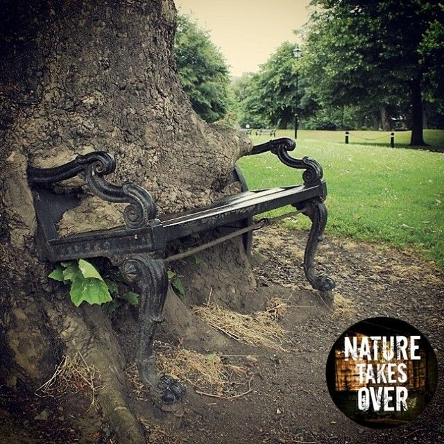 67 Best Images About Nature Taking Over(college Theme) On