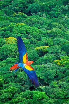 This picture makes me happy.  Beautiful, colorful macaw.