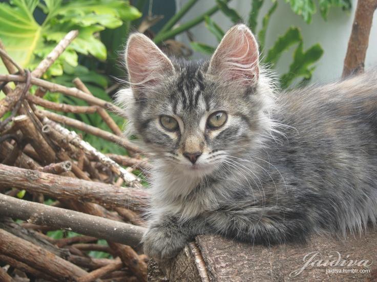 Pelusa <3  #gato #kitten #animals #animales #kitty #pet #mascota #animals #gatita #animal