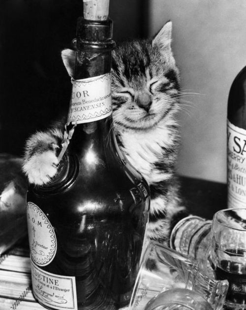 Lovely-KittyCats, magicalnaturetour: Happy New Year ~ 2013 ~ Sweet...