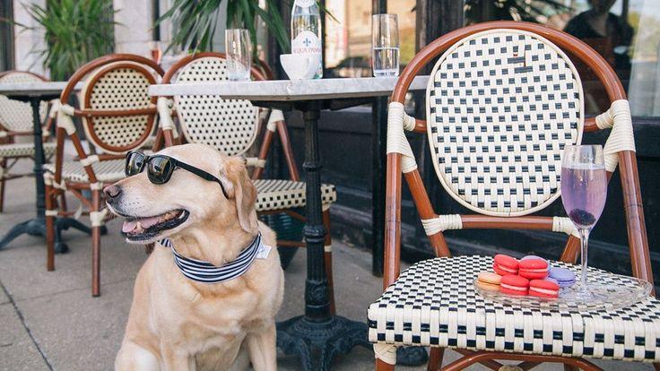 Dog Friendly Resturants in Chicago