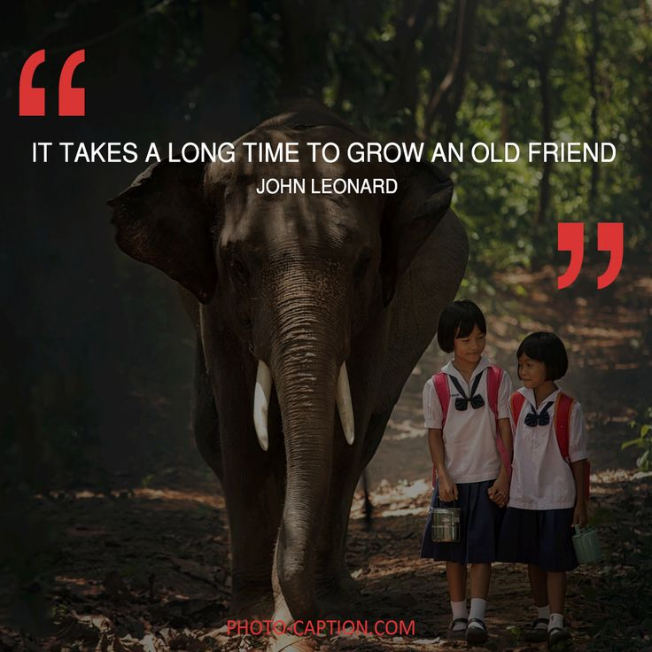 ''It takes a long time to grow an old friend.'' John Leonard Check out the link in the bio for more best friend captions #friendship #bestfriend #love #BOYFRIEND #happy #friend #best #bestie #quotegram #quoteoftheday #photocaption #quote #quotes #quotegram #quoteoftheday #caption #captions #photocaption #FF #instafollow #l4l #tagforlikes #followback
