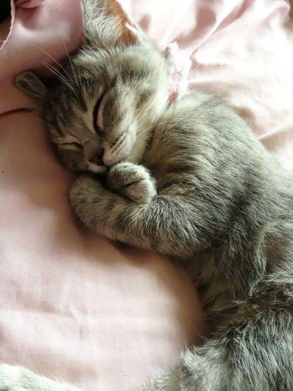 Sleeping – Kätzchen