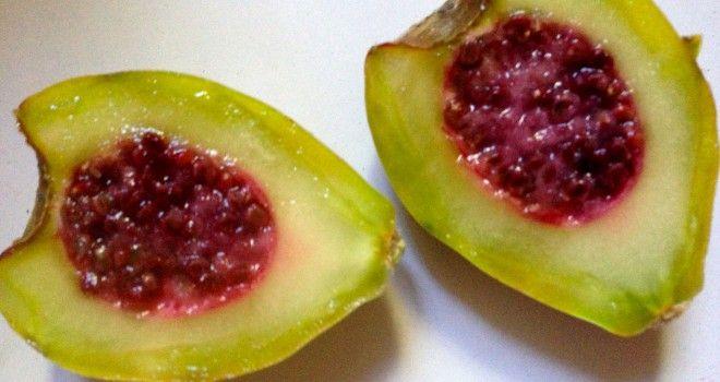tuna fruit carambola fruit